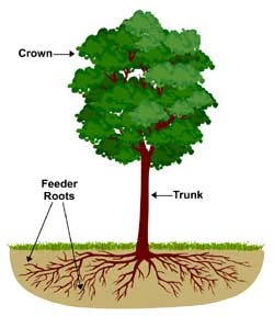 Tree ecology