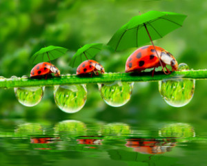 ladybugs, umbrellas, beneficial insect
