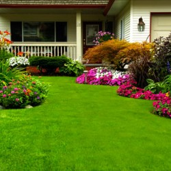 Watering & Feeding Your Lawn in the Summer with Biofeed Turf-Plus