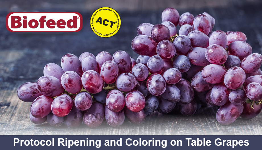 Biofeed solutions inc solving your aquatic environmental and soil needs naturally - Table grapes vs wine grapes ...