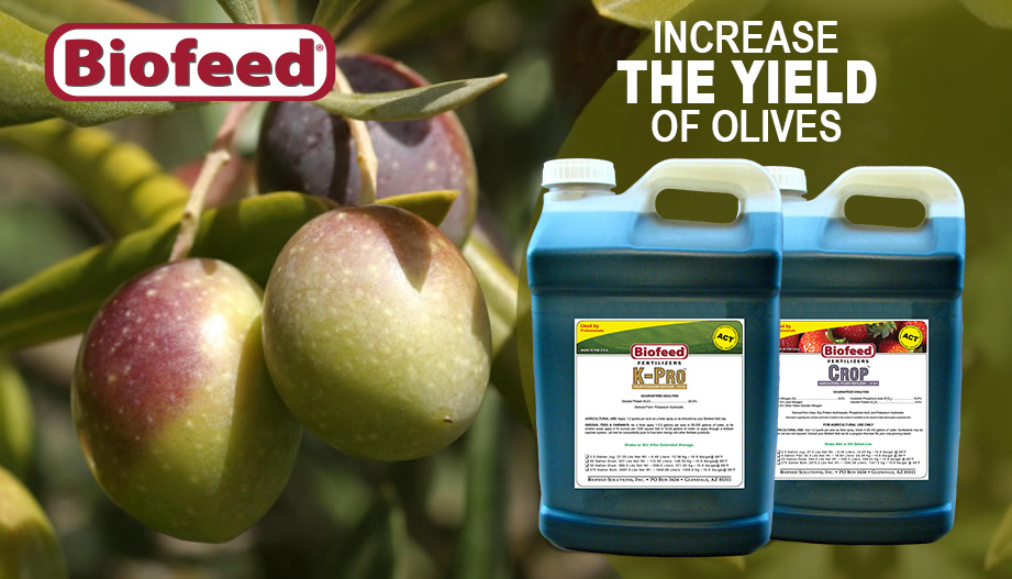 Increase the Yield of Olives
