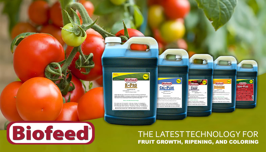 The Latest Technology For Tomato Growth, Ripening, and Coloring
