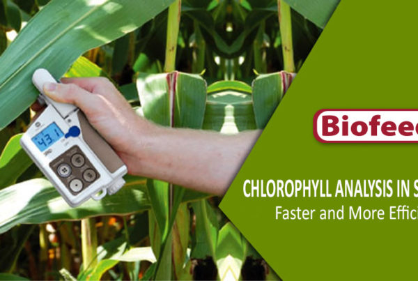 Chlorophyll Analysis in Situ