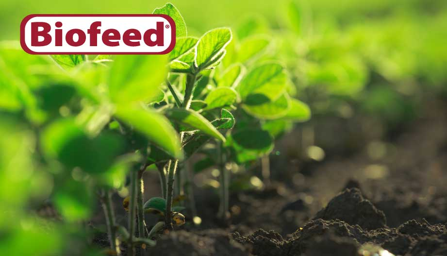 Biofeed® Amino-Carbon Technology® (ACT) vs. Liquid Humates – What's the difference?