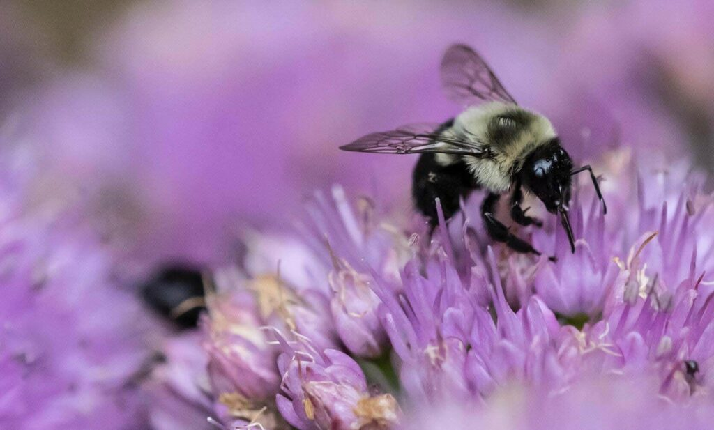 Chemical free for bees
