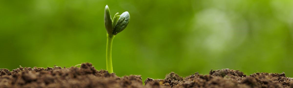 Regenerating Soil for Over 35 Years – Happy Earth Day